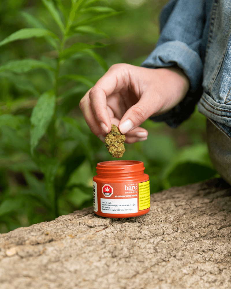 A hand places a cannabis bud inside an orange container